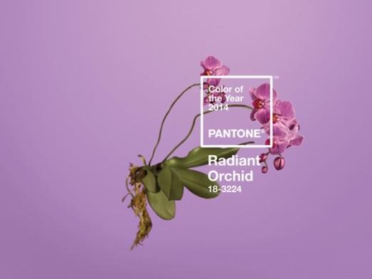 Pantone_RadiantOrchid_WGSN